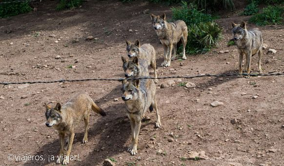 FIN SEMANA ANTEQUERA Lobo park